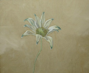 Flannel-Flower,-2014,-oil-on-board,-25x30cm copy