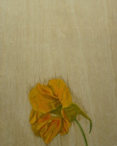 Nasturtium,-2014,-oil-on-board,-25x20cm copy